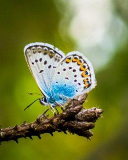 Fjäril på gren – fotografi av Sanning Arkitekter