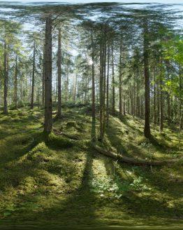 HDRI – Skogsmosse (sommar, eftermiddag) – förhandsgranskning (EV 8.25; Filmic Blender)