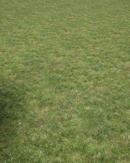 Material – Gräsmatta – förhandsgranskning av mönsterrepetition